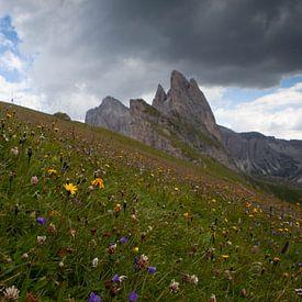 Alpen weide van Leanne lovink