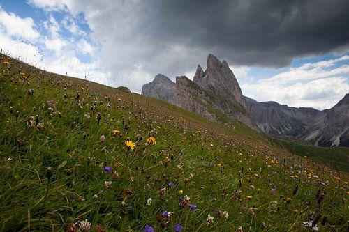 Alpenwiese von