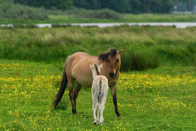 Paard met veulen  op Lentevreugd van Dirk van Egmond