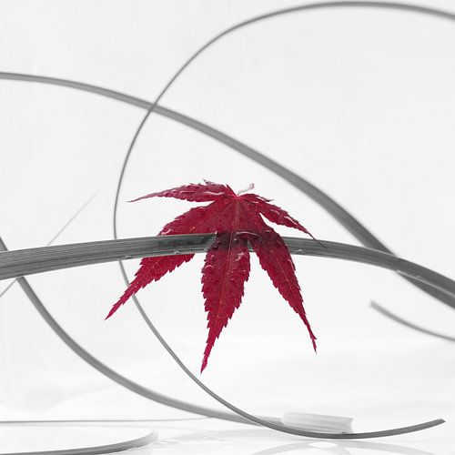 rood blad van Tanja Riedel