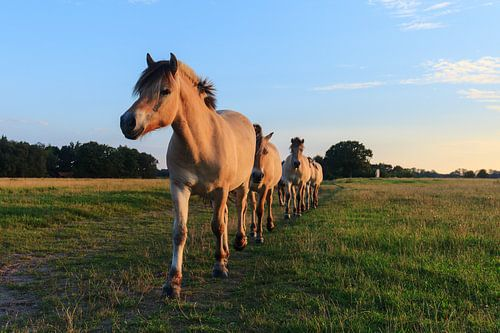 Paarden op een rij van
