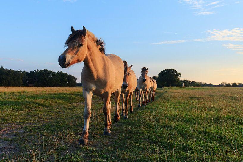Paarden op een rij van Karla Leeftink