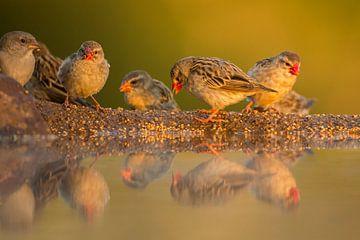 Vögel im warmen Morgenlicht von Anja Brouwer Fotografie