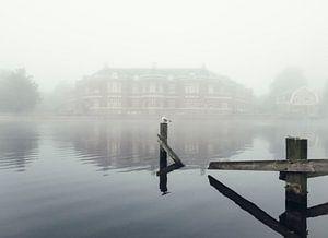 Haarlem: Meeuw in de mist.