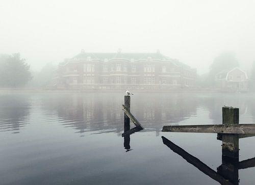 Haarlem: Meeuw in de mist. van Olaf Kramer
