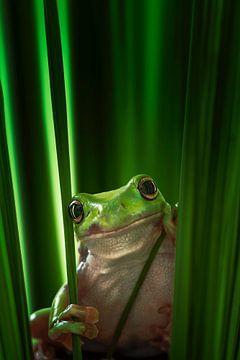 Grüner Frosch, Ahmad Gafuri von 1x