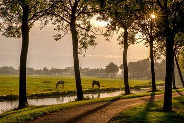 Paarden bij de wetering von Moetwil en van Dijk - Fotografie