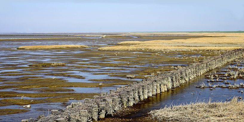 Wattenmeer Maßstab 1:2 von Andreas Wemmje