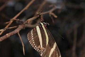 Tropische vlinder met bruin, gele en rode accenten. van Anita Moek
