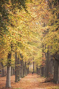 Herbstfarben im Park um Schloss Broekhuizen von Peter Haastrecht, van