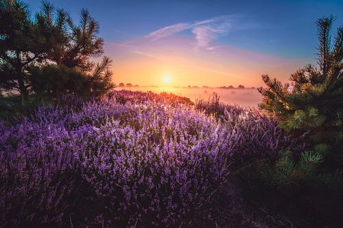 Indrukwekkende zonsopkomst met heidelandschap