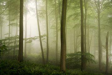 Spring Haze. von Inge Bovens