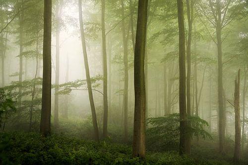 Spring Haze. van Inge Bovens