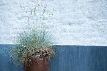 Blaues Gras von Sense Photography
