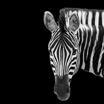 Porträt eines Zebras in Schwarzweiß von Beeldpracht by Maaike