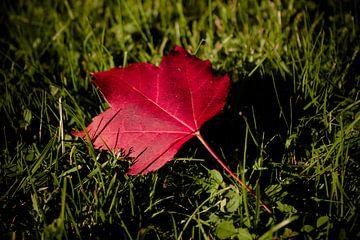 Herbstliebe van Dagmar Marina