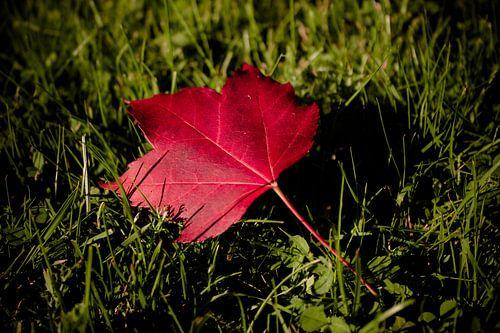 Herbstliebe von Dagmar Marina