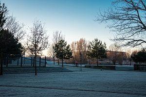 Bevroren ochtenddauw in stadspark