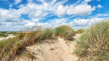 Nederlandse kust met de duinen en de Noordzee van eric van der eijk