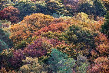 Boomtoppen in herfstkleuren van