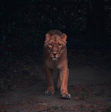Tiger von Dieter Emmerechts