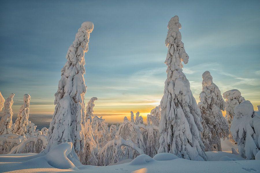 Besneeuwde bomen in Fins Lapland van Menno Schaefer