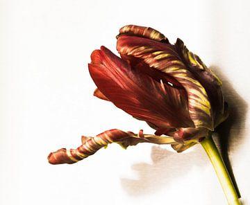 Tulp van Erica Kuiper