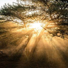 Stoffige zonnestralen van Joris Pannemans - Loris Photography