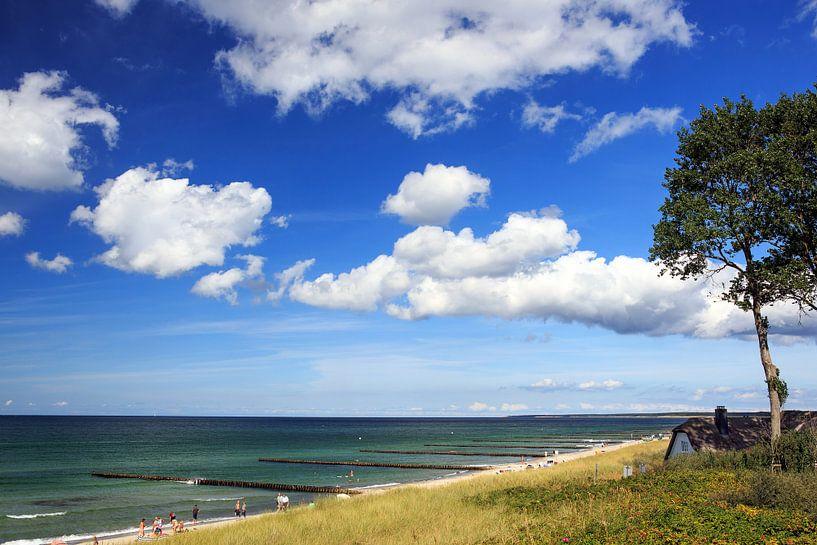 Am Strand von Ahrenshoop von Frank Herrmann