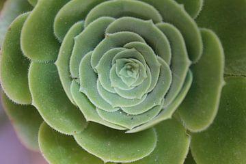 Groene plant met diepte.  von