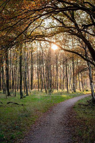 Zonsondergang boven bospad met overhangende tak in de herfst