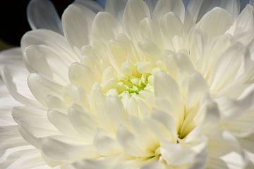 Die Kraft der weißen Blumen von Suzan (Suus) Buskes
