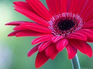 Flowerpower Gerbera rood van bird bee flower and tree