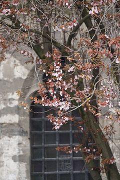 Springtime in Gent van Andreas Wemmje