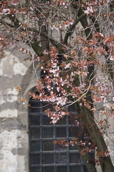 Springtime in Gent