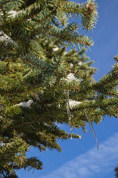 ijspegels in een boom von Andrea Ooms