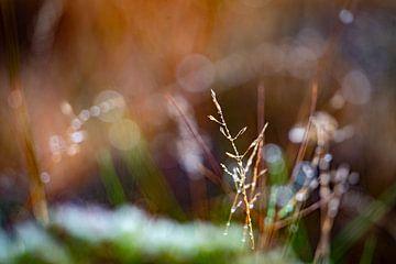 Ijskristallen op planten van ochtend dauw van John Ozguc