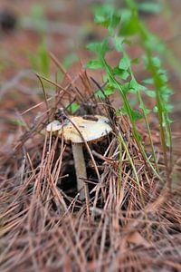 Up mushroom