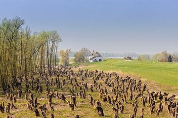 Rivieren landschap bij Zaltbommel van Jaap Spaans