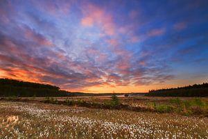 Veenpluis bij zonsopkomst van