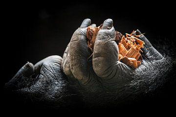 Gorillahände van