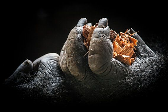 Gorillahände van Ulrich Brodde