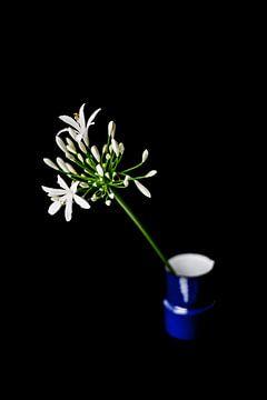 Blume von whatido intheshadow