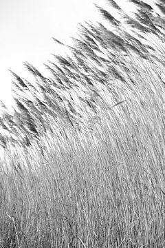 Wuivende strohalmen bij de Reeuwijkse Plassen zwartwit 1 von de buurtfotograaf Leontien