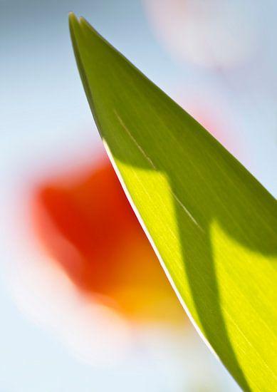 Tulp in tegenlicht 2 van Greetje van Son