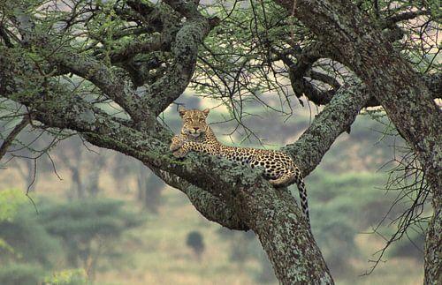 The Tree Is Mine