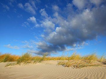 Dünenblick von Ostsee Bilder