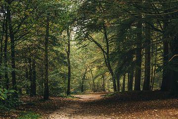 Forest Path sur Lars Korzelius