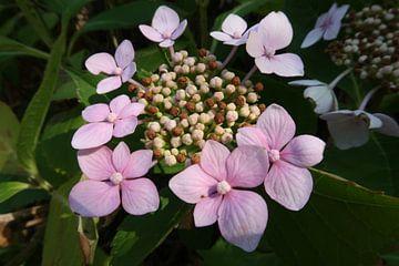 Flowers in Holland van Carola van der Wijden