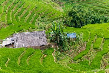 Reisfelder in Südostasien von Richard van der Woude